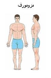 تشخیص تیپ بدنی به زبان ساده