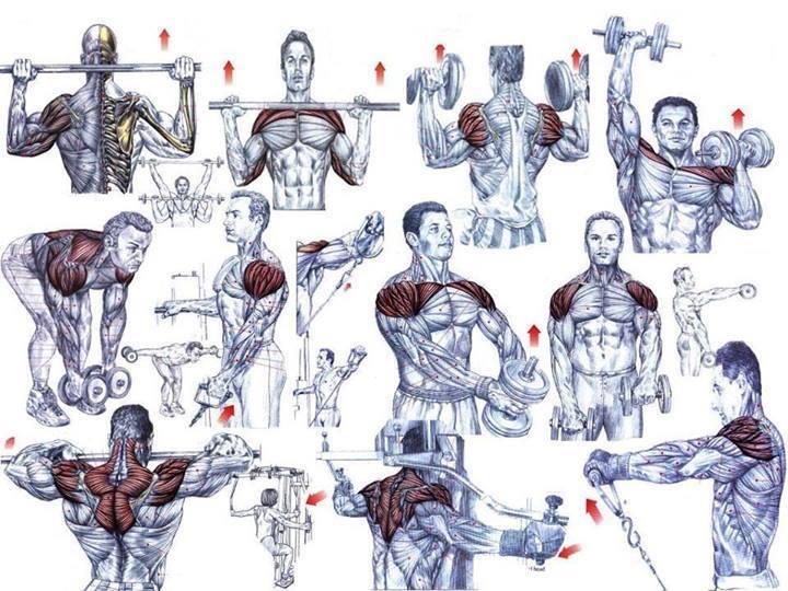 ساختن عضله
