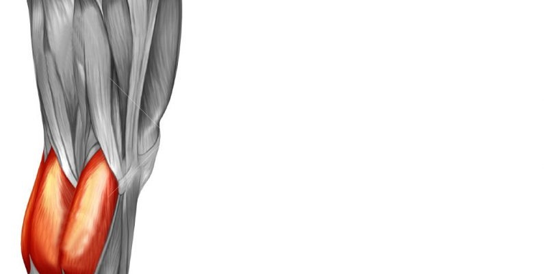 عضلات دو قلوی ساق