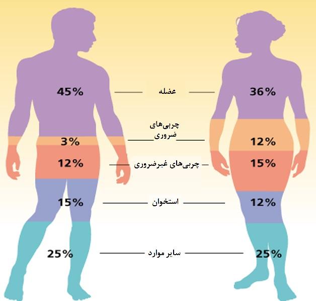 چربی بدن چند درصد باشد خوب است؟