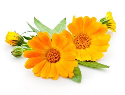 7 گیاه که هر مردی باید مصرف کند