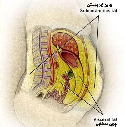 رازهای کاهش چربی شکم
