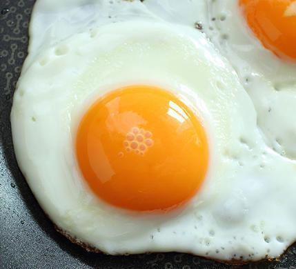 بهترین پروتئین گیاهی برای ورزشکاران