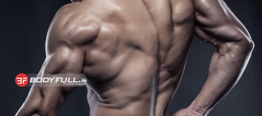 عضلات دو سر و سه سر بازو