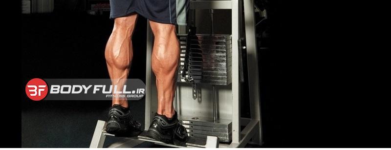 آناتومی عضلات دو قلوی ساق