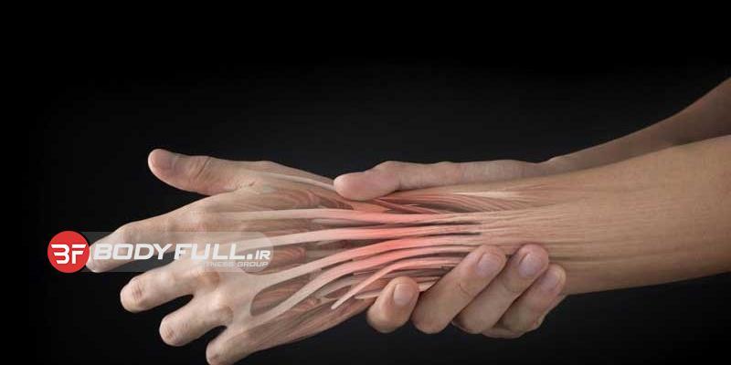 تاندون کابل اتصال عضله به استخوان