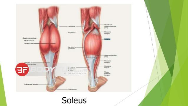 عضلات ساق و ساعد کوچک و بی اهمیت نیست