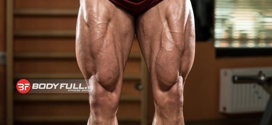 به استثنای عضلات ساق، تعداد 12 عضله در پا وجود دارد