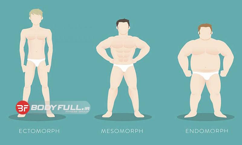 تفاوتهای موجود بین تیپهای بدنی مختلف